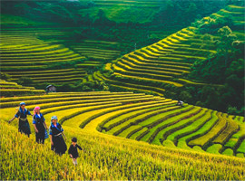 Muong Hoa Valley tours