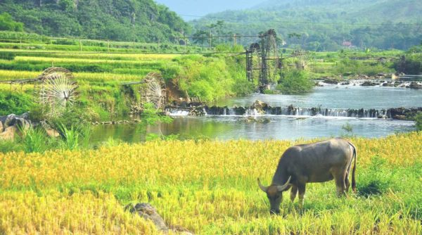 Pu Luong rice fields