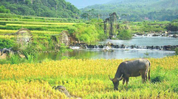 Pu Luong rice fields