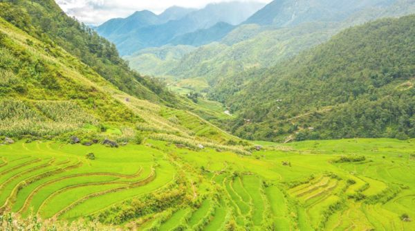 Sin Chai rice paddy fields Sapa