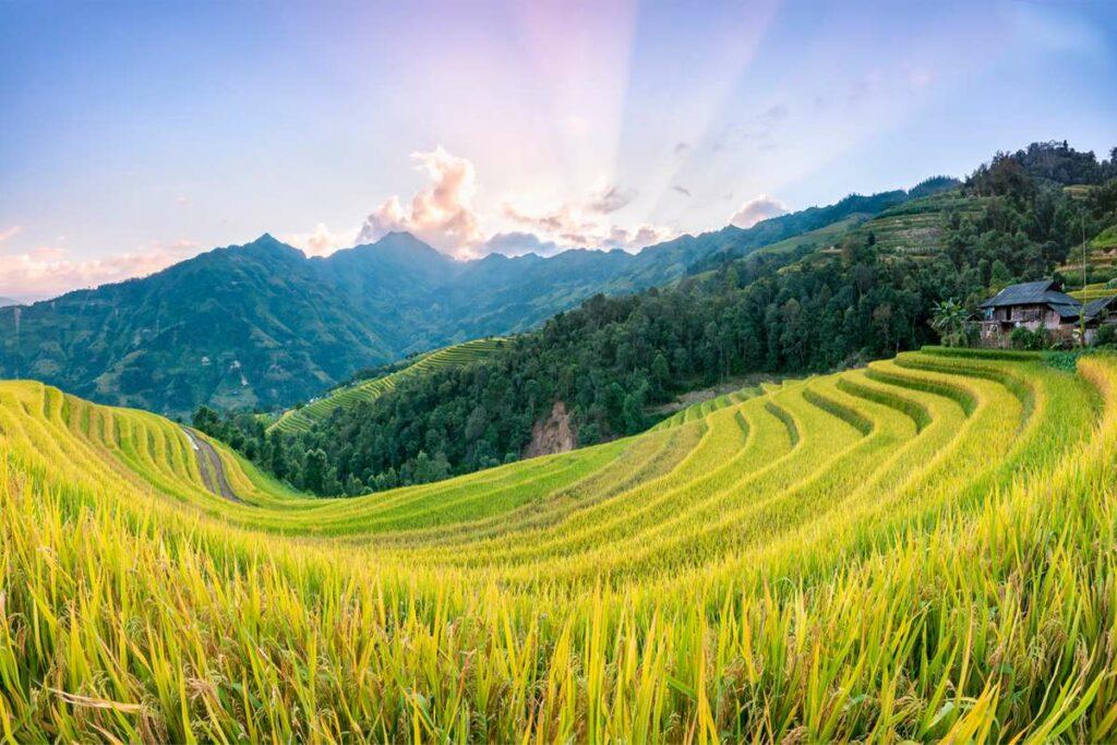 Ban Phung in Hoang Su Phi
