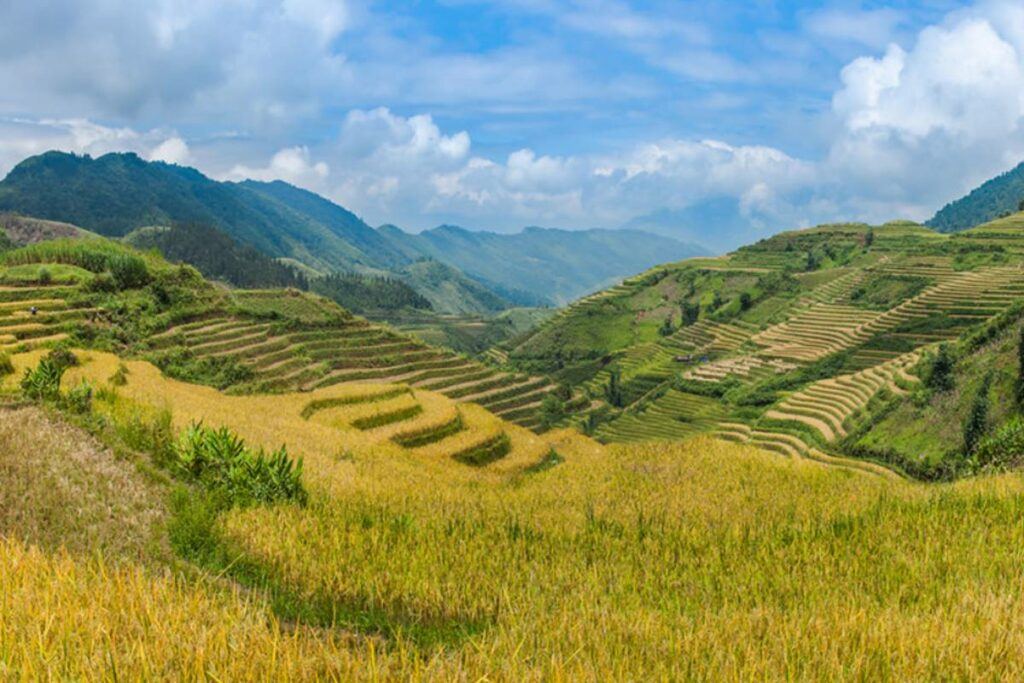 harvest time is the best time to visit Sapa