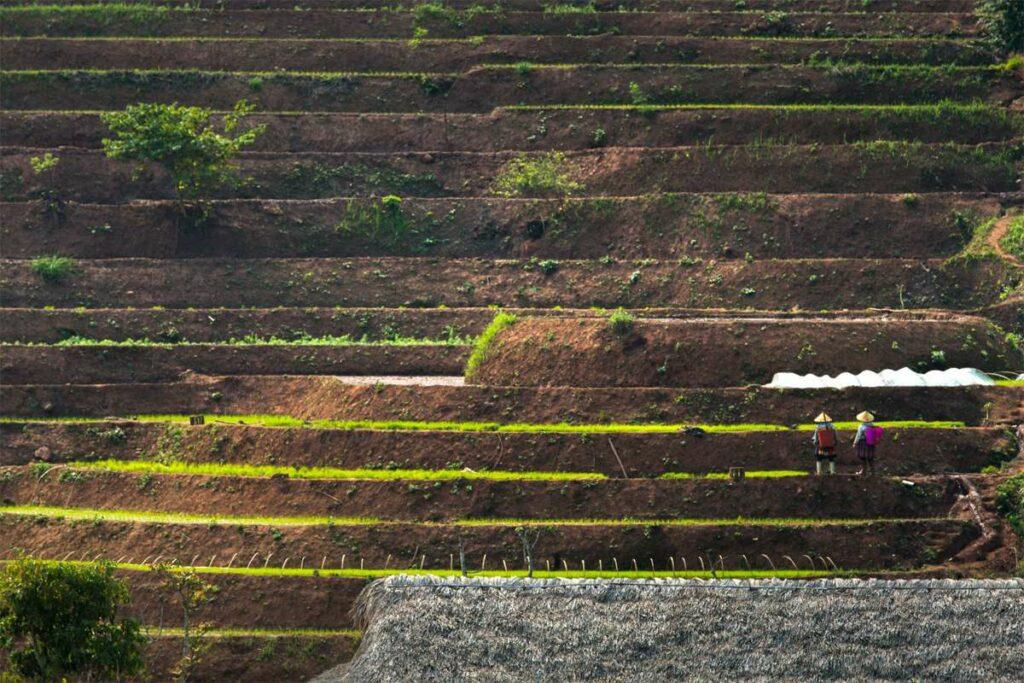 terraced rice fields in Mai Chau